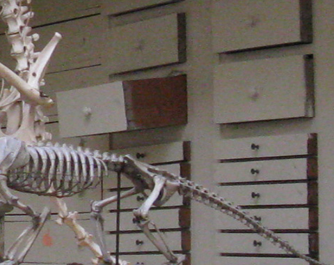 Representative image of the 'Harvard Peabody Mus. Zooarchaeology' project