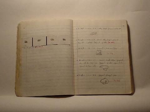 Preview of Trench Book EN II:100-101